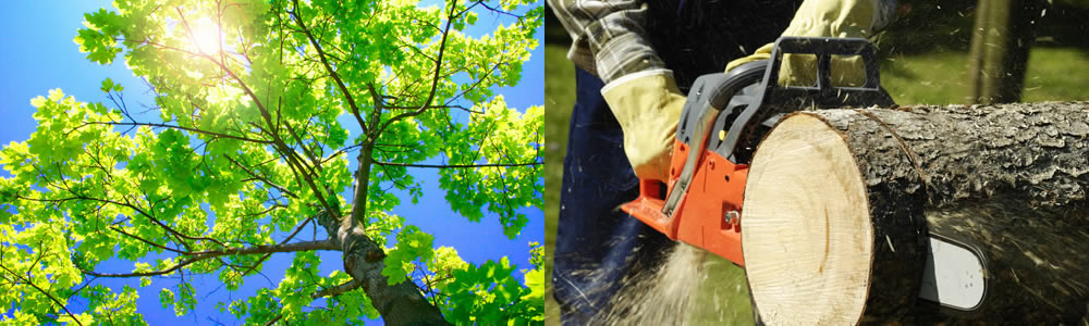 Tree Services Dorchester